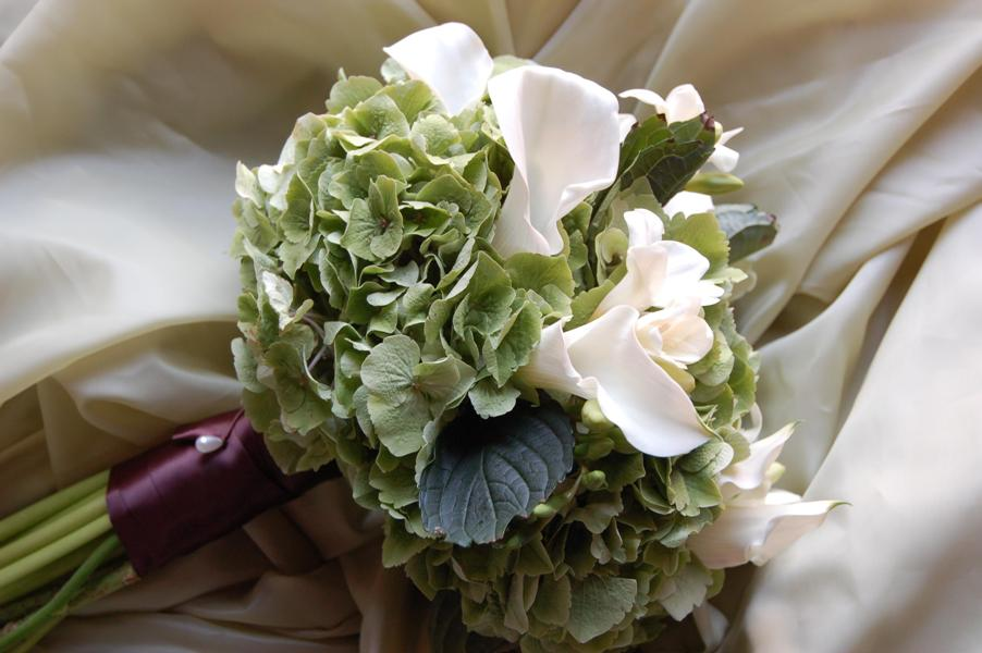 green-hydrangea-elegance-and-simplicity