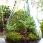 Project Fairytale: DIY Terrarium