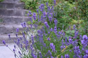 @projectfairytale: 4 Tricks For A Low Maintenance Garden
