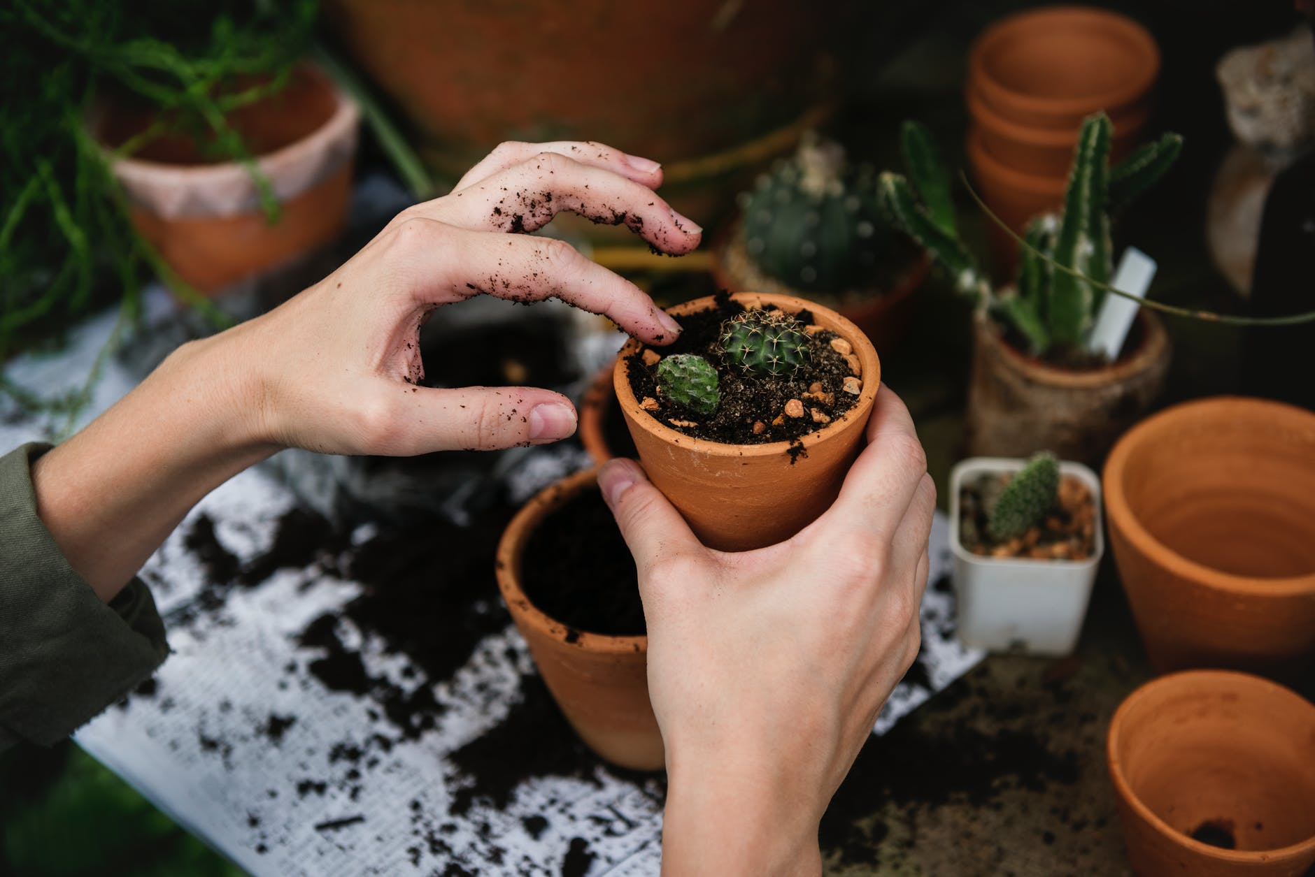 @projectfairytale: Helping Your Garden to Thrive in Colder Temperatures